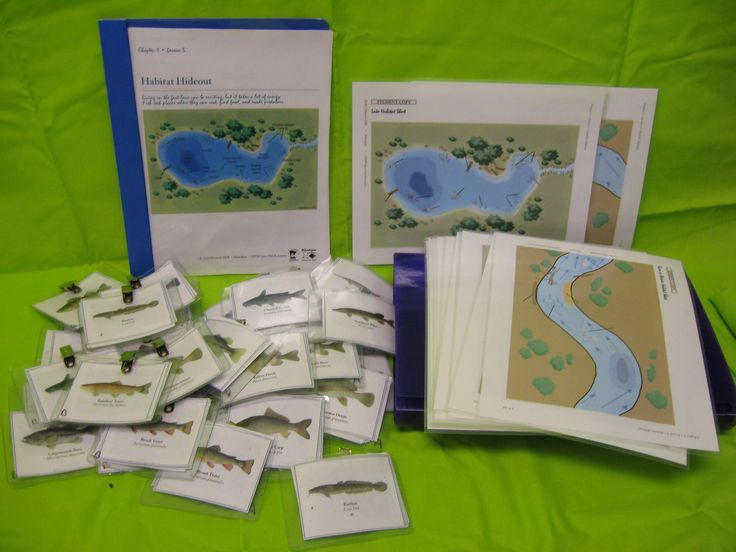 Many wildlife/ natural resources lesson plans from MN DNR