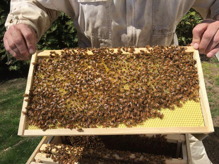 Crystal Bee Supply