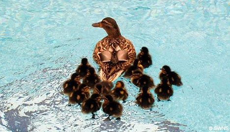 Family of ducks in a swimming pool chickens and ducks for Chicken in swimming pool