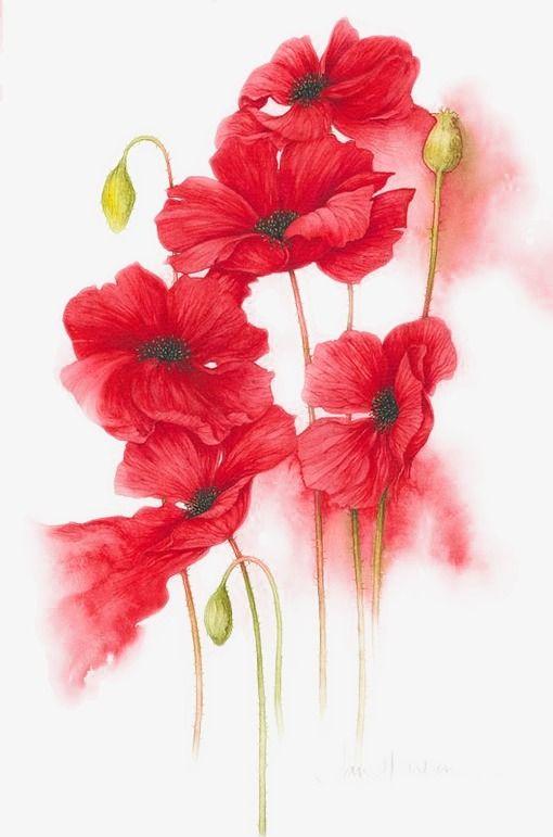 Pintado a mano de flores rojas ilustración, Pintado A Mano, Flor, Flores Rojas PNG y Vector