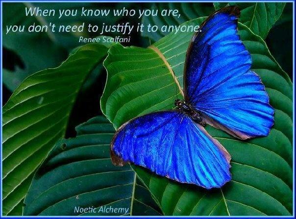 Flutterby: Beautiful Butterflies, Blue Butterflies, Colors, Blue Green, Bluegreen, Costa Rica, Insects, Blue Morpho, Animal
