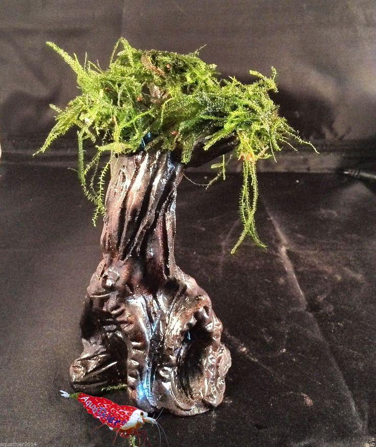 Black Widdow mit Moos - Aquarium Dekoration Ton Moos Versteck Garnelen   eBay