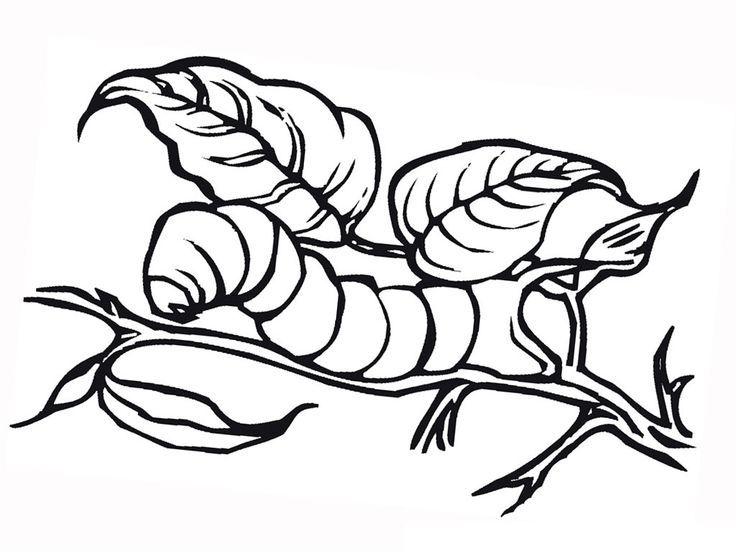 Easy Free Printable Caterpillar Coloring Pages For Kids Pdf Coloring Pages For Kids Coloring Pages Animal Coloring Pages