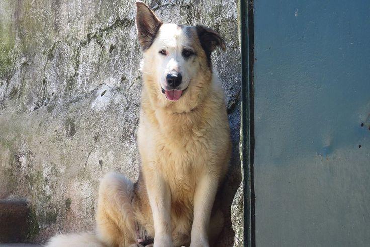 Campanha para ração e adopção de cães e gatos até Julho junta site de anúncios e quatro associações de animais