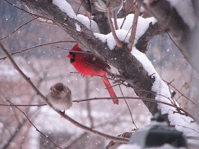 DNES ANGLICKY: ABC Song Foto Cardinals