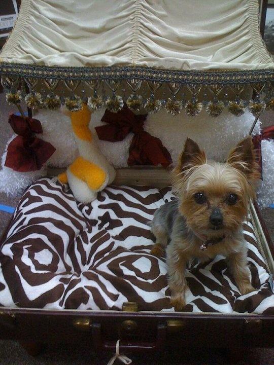 Vintage Dog Bed Suitcase