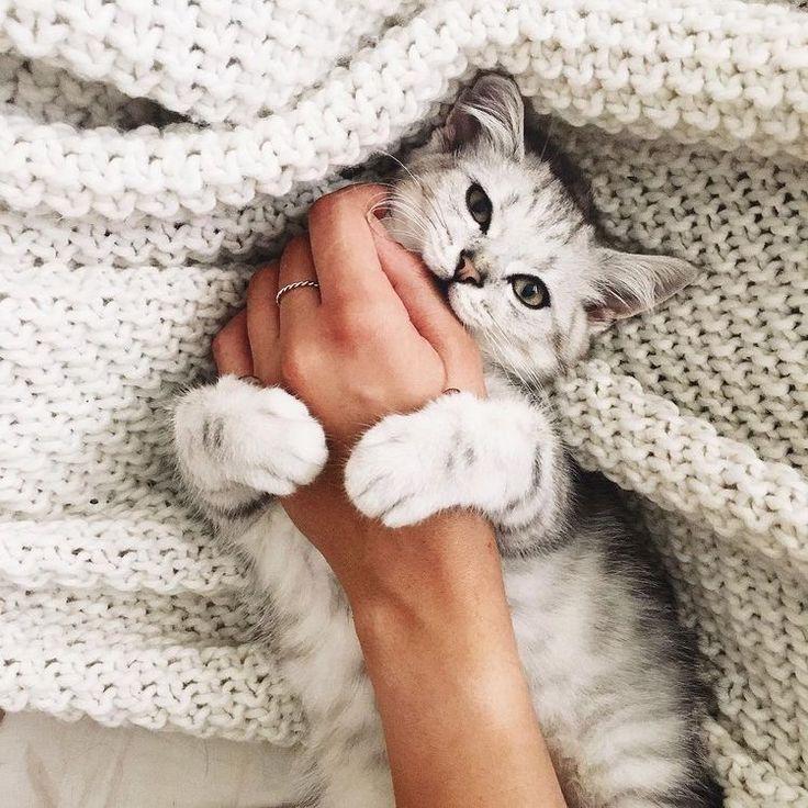 Кот с руками картинки
