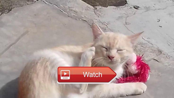 😸 Video kucing lucu terbaru funny catnews 😼 Kucing lucu terbaru 😽 on Pet Lovers 😻