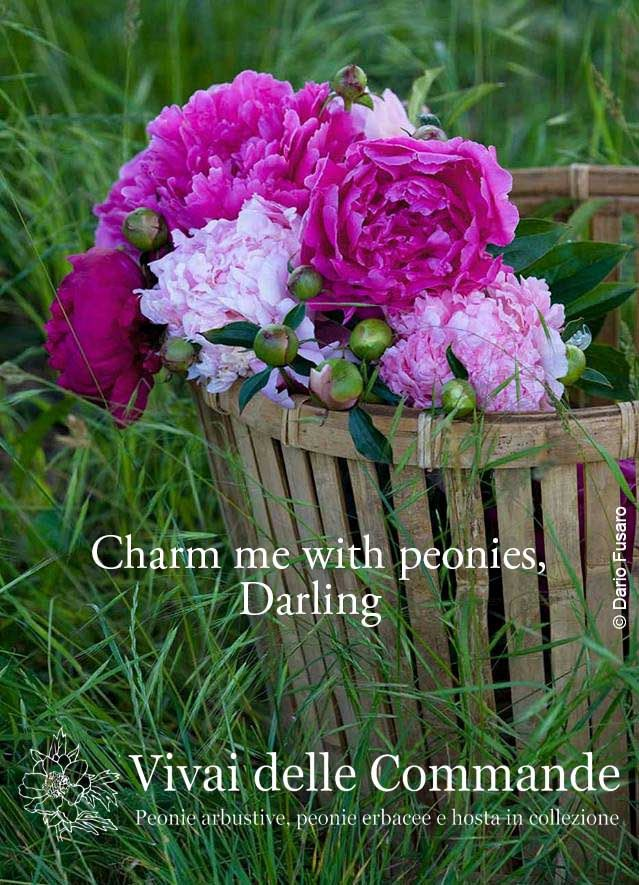 Charm me with peonies, Darling