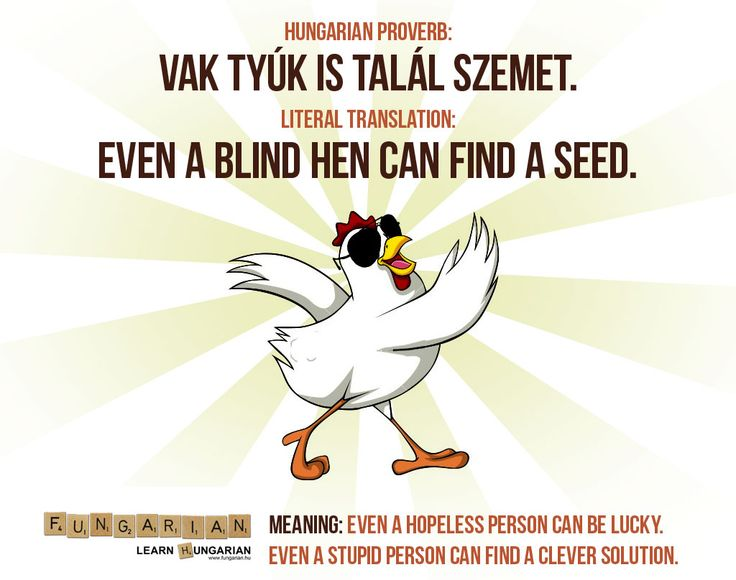 Vak tyúk is talál szemet ~ Even a blind hen can find a seed... But this is not something to be depended upon often.