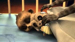 baby oleg meerkat - adorable!!