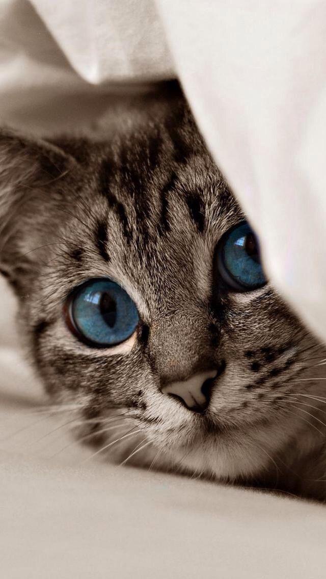 Pretty blue-eyed kitty.