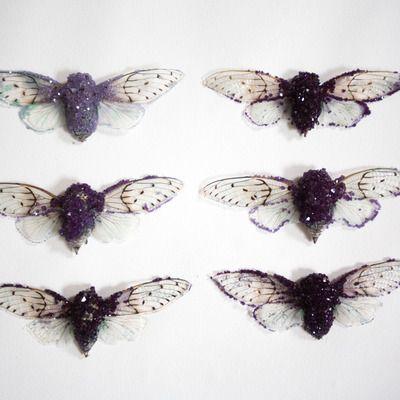 """""""amethyst"""" ghost cicada"""