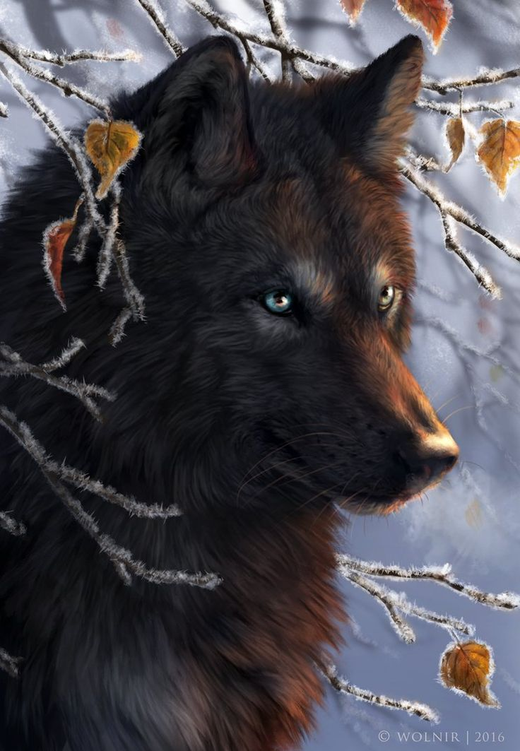 The 25+ Best Wolf Drawings Ideas On Pinterest