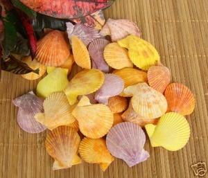 Http www grassshacktrading com seashell craft ideas pinterest