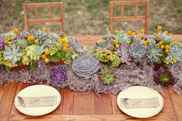 long table arrangement with succulents and spanish moss