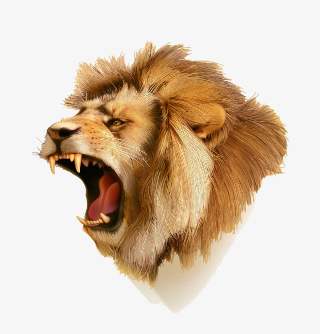 Cartoon Lion Lion Clipart Cartoon Clipart Lion Png Transparent Clipart Image And Psd File For Free Download Lion Clipart Cartoon Lion Roaring Lion