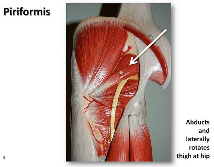Piriformis Muscles Of The Lower Extremity Anatomy