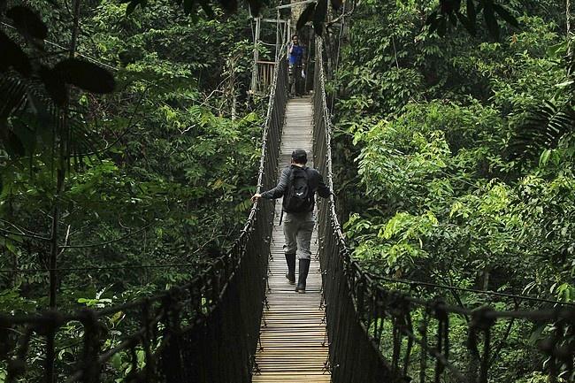 Iquitos Peru, Canopy Walkway