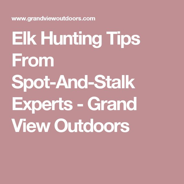 Elk Hunting Tips From Spot-And-Stalk Experts - Grand View Outdoors