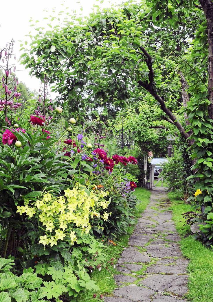 Pelargoneja, luonnonkiviä ja kiemurtelevat sorapolut rehevien istutuksien lomassa. Mummolan puutarhaan liittyvät ikimuistoiset tuoksut ja rauhoittava tunnelma.