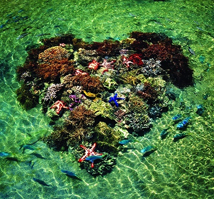 daydream island the whitsunday queesland | Daydream Island | Whitsundays | Great Barrier Reef