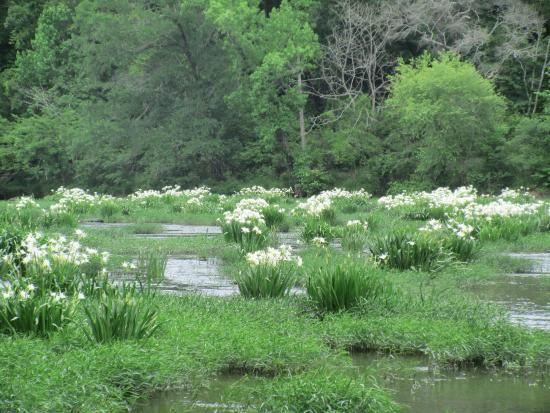 Photo of Cahaba River National Wildlife Refuge