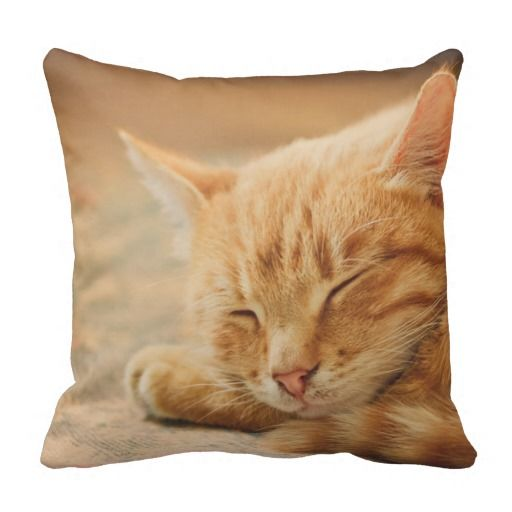 44 best images about Cat Throw Pillows on Pinterest Tabby cats, Romantic photos and Throw pillows