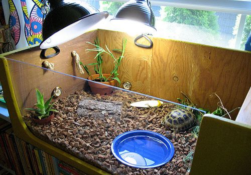What does a box turtle need as a cage? Keeping them as pets is super awesome and not all turtles are aquatic.