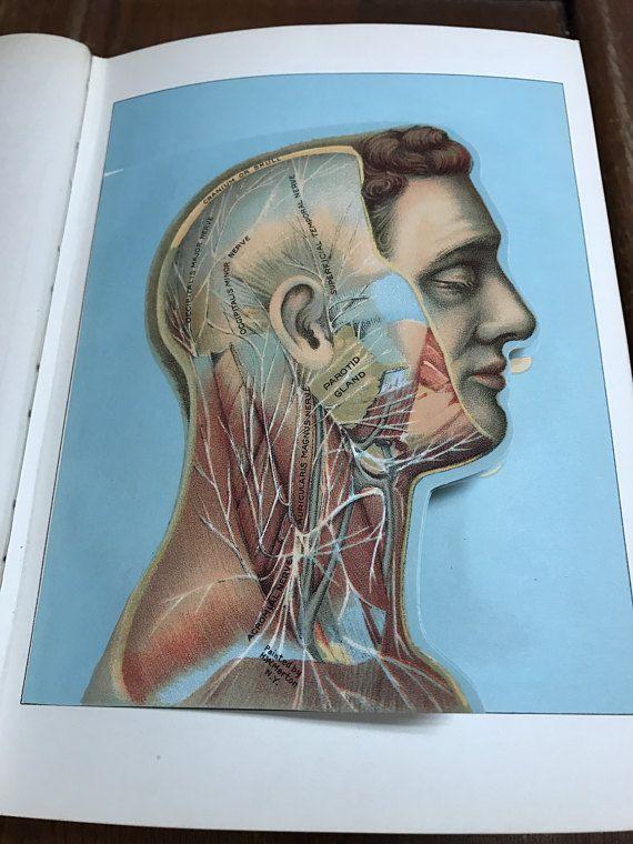Antique medical oddity book 1913 Domestic Medical Practice
