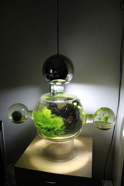 Interesting Shrimp Aquarium