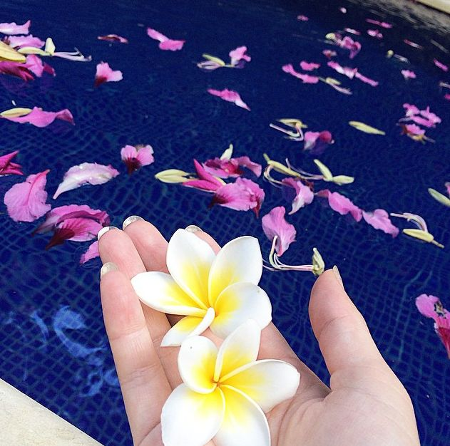 You can find lots of Jepun (frangipani or plumeria) in Bali.. this flower is not only for yard decoration or hair decoration for Dancer, it is also one flower that mostly use for offerings. These trees are grown everywhere in Bali because the blossoms are very fragrant and popularly used in offerings and for hair decorations.   image by our guest @eitan_no_mama