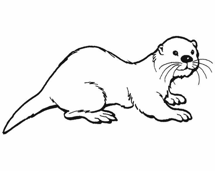 21 best vydra images on pinterest  otters wild animals