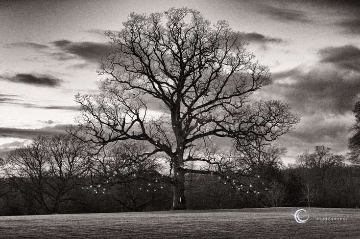 Majestic tree in the grounds of Rathsallagh House Hotel - lit up at night