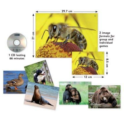 Audio Flashcards - Animals