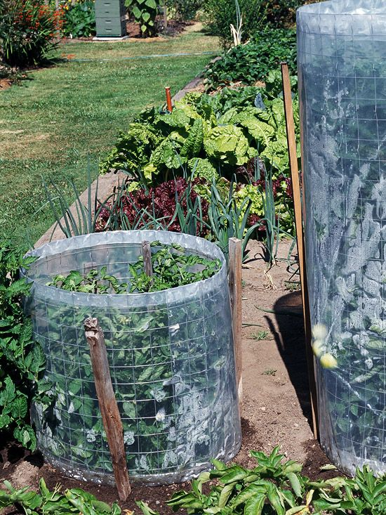 Make your tomato cage serve double duty by wrapping a wire mesh cylinder (rabbit fencing works well) with clear polyethylene. The wire cylinder supports the plant and the plastic wrap acts as a mini greenhouse boosting tomato growth during cool weather. As summer heats up, remove the plastic covering to make harvest easier, improve airflow through the plant's leaves, and reduce disease problems./