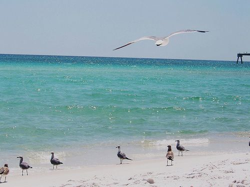 Image detail for -... of the Gulf of Mexico and the Gulf of Mexico's beautiful beaches