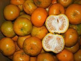 trik-memilih-buah-jeruk-yang-manis-dan-segar
