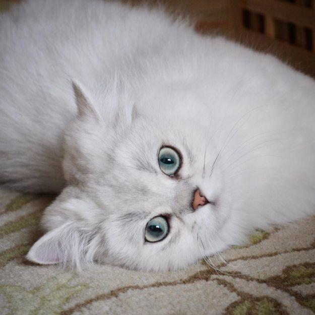 Reggie, lui, préfère un eye-liner marron, tout aussi parfait mais plus subtil. | 16 photos de chats qui sont plus doués que vous pour faire un trait d'eye-liner
