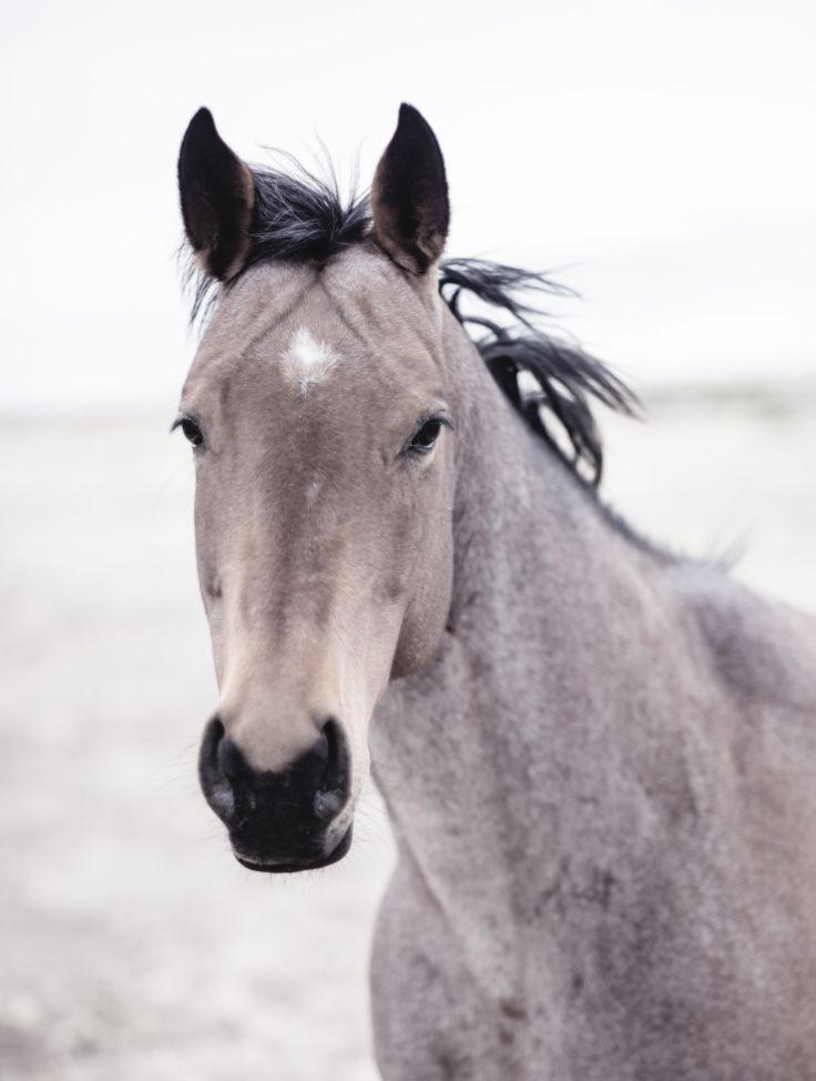 Buckskin Mare dream horse on my dream farm!