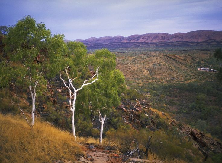 MacDonnell Range Station ~ It rested there Nestled in the valley Watched over by ghost gums Fortified by mountains ... (more)