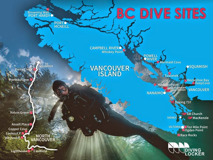 British Colombia holds some of the world's best cold water dive sites. Join the Diving Locker's dive team and explore the beauty this province has to offer. Check out the Diving Locker's online calendar for upcoming scuba diving trips: http://www.divinglocker.ca/view-trips/local/