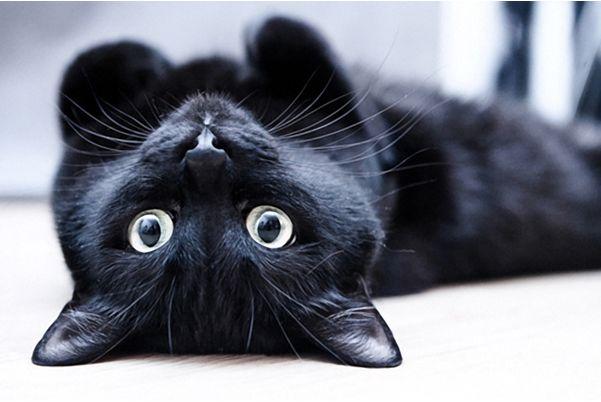 Как подбирать имена для кошек: советы по выбору кличек, интересные варианты