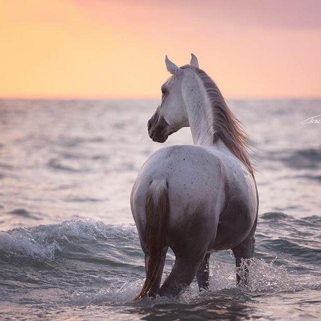 Woher kommst du? Ich bin in der Nähe von München zu Hause – im schönen Bayern …   – Horses