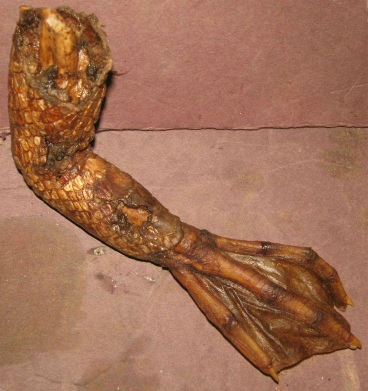 "Mermaid GatorMan Swamp Creature Arm Claw Alien Mummified  Sideshow Gaff Cryptid  ~ You'll Alway Find Something ""Interesting"" At ~ http://www.ebay.com/sch/gaffenstein69/m.html?item=390901967383&rt=nc&_trksid=p2047675.l2562"