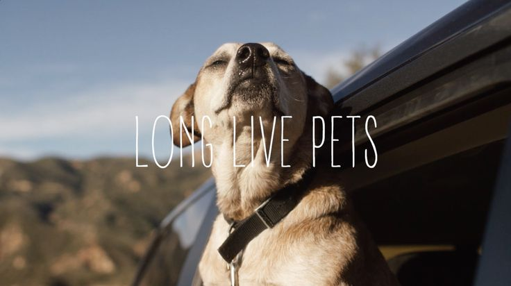 Long Live Pets | Casestudy | B-Reel