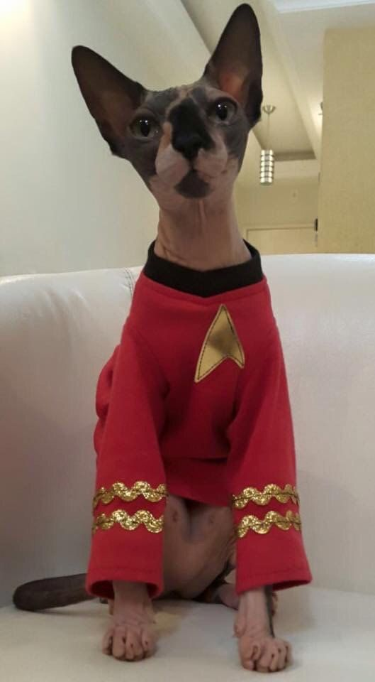 Pet Costume Star Trek Engineer Ships starting JUNE  2016 sphynx cat clothes Star Trek Shirt  Pet Cat Costume by SimplySphynx