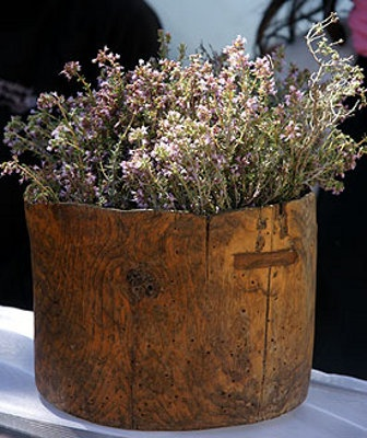 Wild thyme displayed in wooden bucket....actually it`s called a hornbeam...~♥~