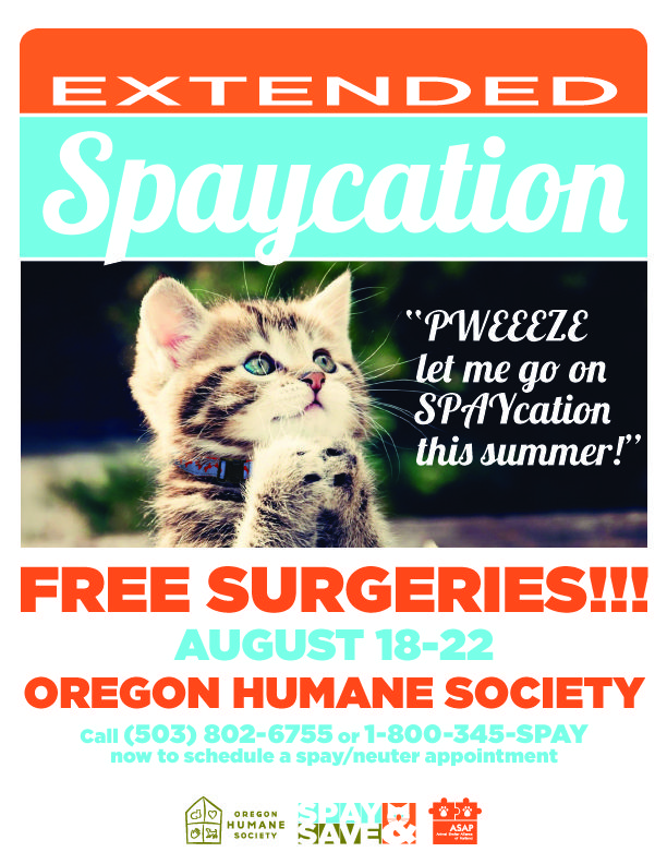 It's kitten season! Extended Spaycation at OHS get cats