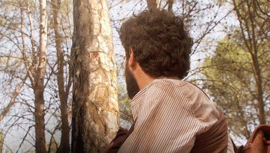 Il Segreto: Puntata n. 1145 - Bosco viene travolto da un albero e.. Mercoledì 26 ottobre 2016